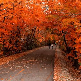 Autumn stroll ! by Avishek Bhattacharya - Landscapes Travel ( indiana, monon trail, autumn, autumnal leaves, foliage, leaf color, fall, trail, walk, carmel, fall color,  )