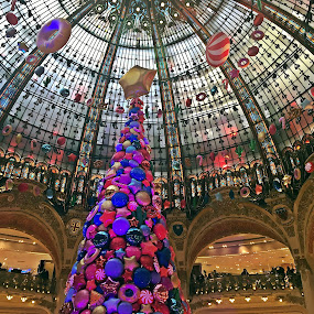 At Lafayette's by Dobrin Anca - Public Holidays Christmas ( store, tree, decoration, green )