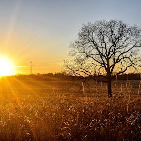 Dorothy Carnes Park Sunset by Jason Lockhart - Landscapes Sunsets & Sunrises ( tree, dorothy carnes park, sunset, fort atkinson, wiscosin )