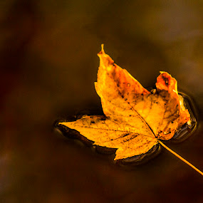 resting by Paul Scullion - Nature Up Close Leaves & Grasses ( fall leaves on ground, nature, autumn, folliage, abscission, fall, leaves,  )