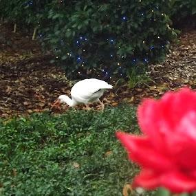 Beautiful by Zach Church - Nature Up Close Flowers - 2011-2013