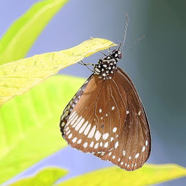 by Kuntal D - Animals Insects & Spiders