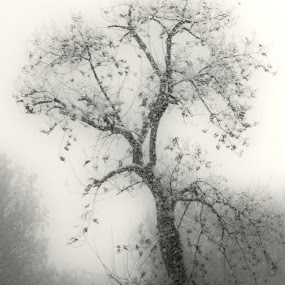 misty by Aleksandar Z Dimitrijević - City,  Street & Park  Street Scenes ( misterious, park, tree, lonliness, snow, women, mist )