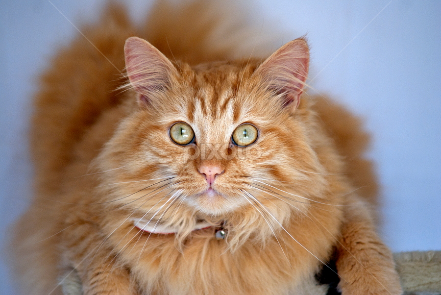 by Kelly Astley - Animals - Cats Portraits