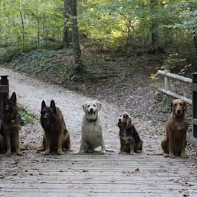 by Ivana Tilosanec - Animals - Dogs Portraits ( pets, nature, dogs, animals, park )