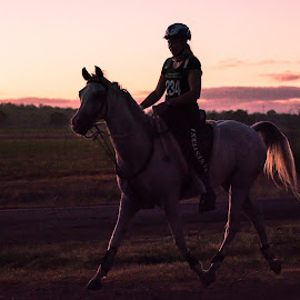 Sunrise Ride by Sarah Sullivan - Sports & Fitness Other Sports ( #australia, #horses, #qera, #sarahsullivanphotography, #endurance, #sunrise )