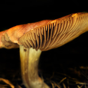 Mushroom by Cristobal Garciaferro Rubio - Nature Up Close Mushrooms & Fungi ( mushroom, grass, white, zeta, mushrooms )