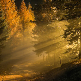 Breakthrough by Miro Zalokar - Landscapes Forests