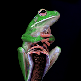 here iam by Robert Cinega - Animals Amphibians