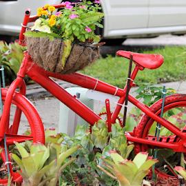 Decorated bike by Priscilla Renda McDaniel - Transportation Bicycles ( red, bike, basket w/flowers, decorated, flowers, ferns,  )