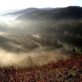 u jutro       by Zeljko Sajko-Saja - Landscapes Mountains & Hills ( novska jezero jutro, jutro, šuma put, cesta, magla, šuma, , HDR, Landscapes, path, nature, landscape )