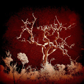 Outback Tree by Rebecca Pollard - Digital Art Things