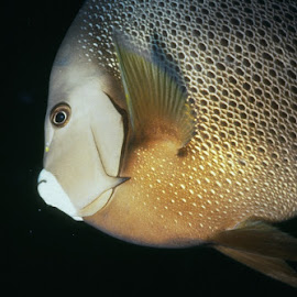 by Julius Wiggins - Animals Fish