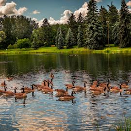 Hawrelak City Park Edmonton by Joseph Law - City,  Street & Park  City Parks