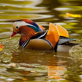 by Gašper Kamenšek - Animals Birds