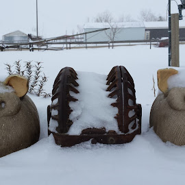Snow Blind by Jennifer Ablicki - Artistic Objects Antiques ( pair, snow, pigs, hog oiler, antiques )