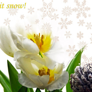 Let it snow! Typog.jpg