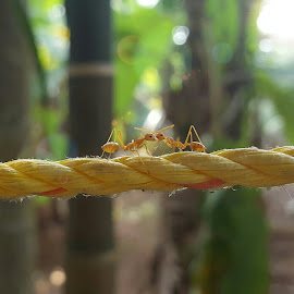 Ant chat by Rahul Manoj - Novices Only Macro ( tree, rope, green, ants, yellow )