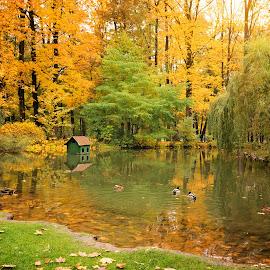Ducks by Witold Steblik - City,  Street & Park  City Parks ( water, park, nature, ducks, landscape, birds )