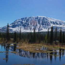 Alaska by Aaron Pedersen - Landscapes Mountains & Hills ( water, reflection, mountains, alaska, trees )