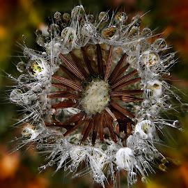 Reflections Of Dreams by Marija Jilek - Nature Up Close Leaves & Grasses