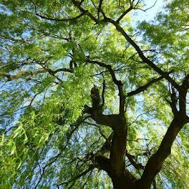 by Patricia Vleeming - Nature Up Close Trees & Bushes (  )