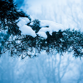 by Vix Paine - Landscapes Weather ( haze, snow at dusk, wood, silhouette, snowy, landscape, woods, early morning, dawn, tree, fog, branch, trees, mist )