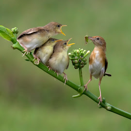 feeding  by Esther Pupung - Animals Birds