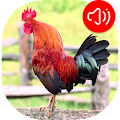 Rooster Ringtones APK for Kindle Fire