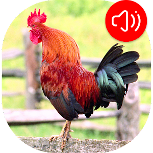 Rooster Ringtones For PC