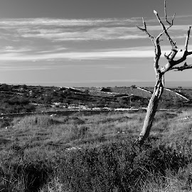 Alone by Gil Reis - Black & White Landscapes ( old, life, bio, nature, places, portugal )