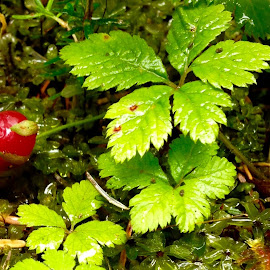 Forest Floor by Debra Branigan - Nature Up Close Other plants ( other plants, nature up close, iphone, photography,  )