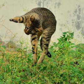 Jumping by Hans Dihan - Animals - Cats Playing ( playing, startled, backyard, run, jump )
