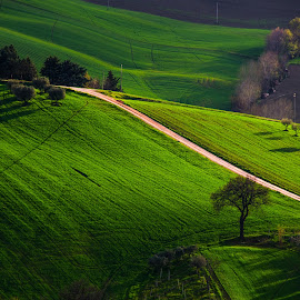 Green Hills by Emanuele Zallocco - Landscapes Prairies, Meadows & Fields