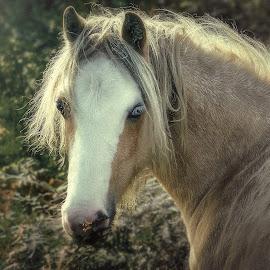 by Tomasz Marciniak - Animals Horses