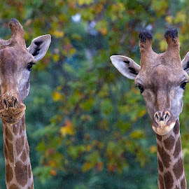 by Kishu Sing - Animals Other Mammals
