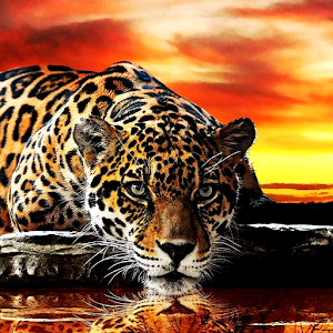 Leopard live wallpaper for PC-Windows 7,8,10 and Mac