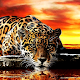 Leopard live wallpaper for PC-Windows 7,8,10 and Mac 1.0.0