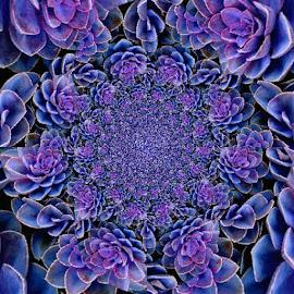 Flora Dance by Virginia Howerton - Digital Art Abstract