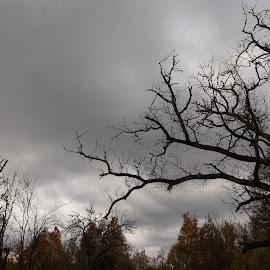 Време by Georgi Kolev - Novices Only Landscapes ( небе., есен., храсти., тишина., дървета. )