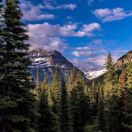 Morning View, Glacier National Park by Ron Biedenbach - Landscapes Mountains & Hills ( clouds, mountains, sky, park, trees, forest, woods, glacier national park )