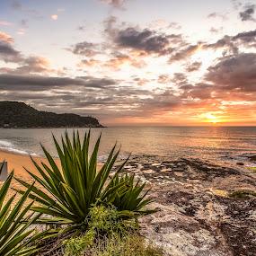 Ilhota Beach  by Rqserra Henrique - Landscapes Beaches ( clouds, brazil, dawn, rqserra, sunrise, beach, landscape, rocks, sun )