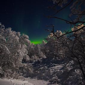 by Yvonne Reinholdtsen - Uncategorized All Uncategorized ( winter, tree, aurora borealis, snow, norway )