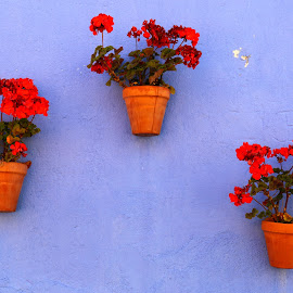 Colors by Gil Reis - Artistic Objects Other Objects ( places, walls, homes, flowwers )