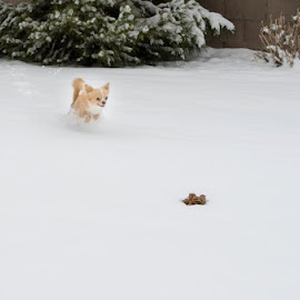 Jaxon by Kendra Mae Jones - Animals - Dogs Running (  )