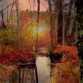by Susan Hogan - Landscapes Waterscapes