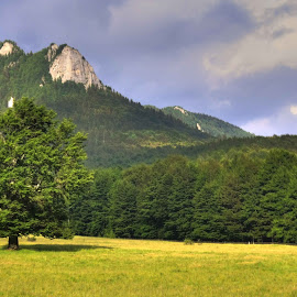 Meadow in Ciucas by Horia Morariu - Landscapes Prairies, Meadows & Fields ( mountains, tree, meadow, summer, ciucas )