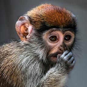 by Renos Hadjikyriacou - Animals Other Mammals (  )