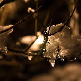Evening light by Henrik  Krogsgaard - Nature Up Close Trees & Bushes