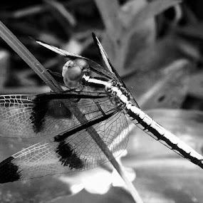 by Soumyadip Ghosh - Black & White Macro